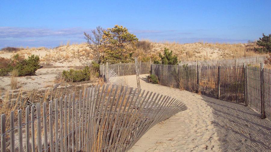 Beach Photograph - Cape Henlopen 2 by Cynthia Harvey