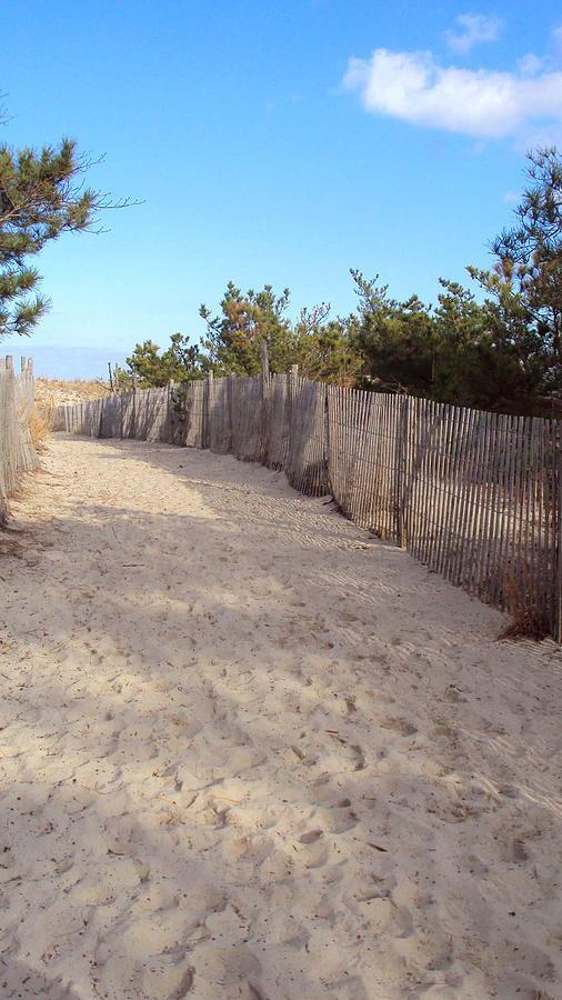 Beach Photograph - Cape Henlopen 5 by Cynthia Harvey