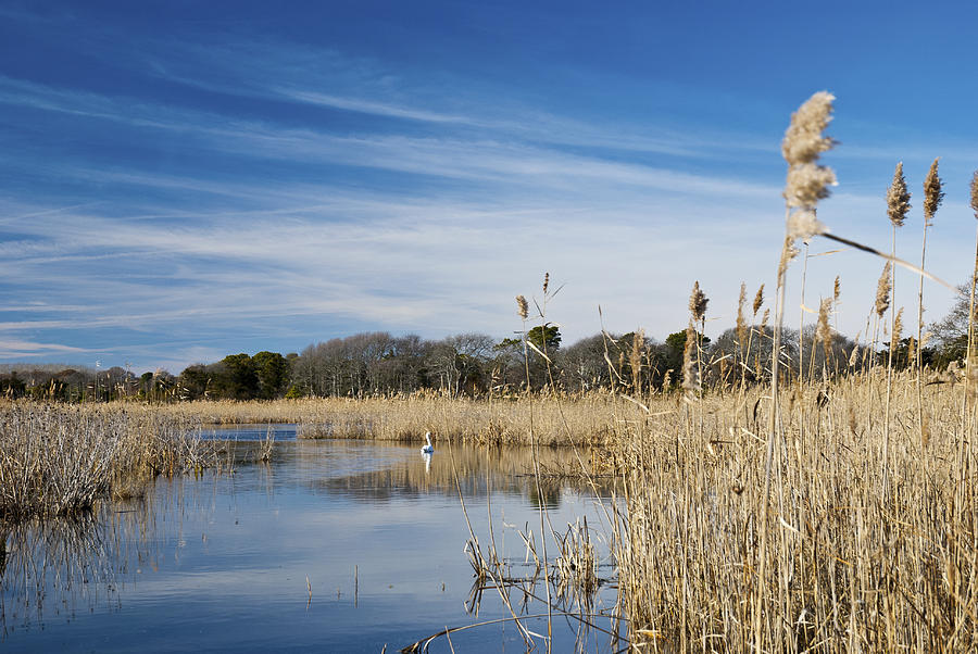 Cape May Photograph - Cape May Marshes by Jennifer Ancker