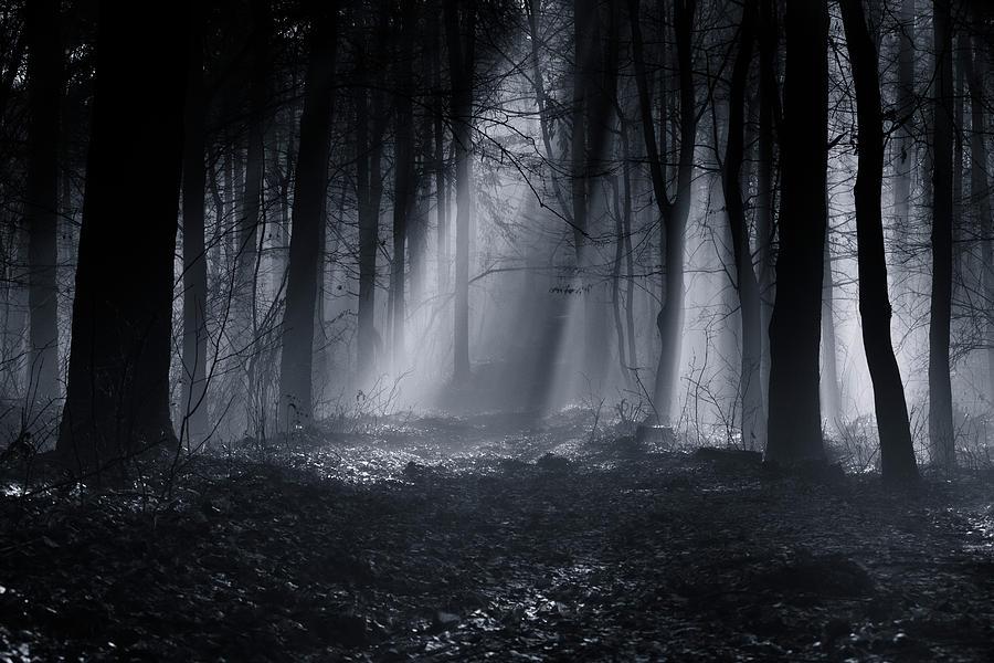 Forest Photograph - Capela Forest by Julien Oncete