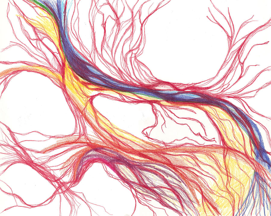 Capillaries Drawing - Capillaries by Lindsay Clark