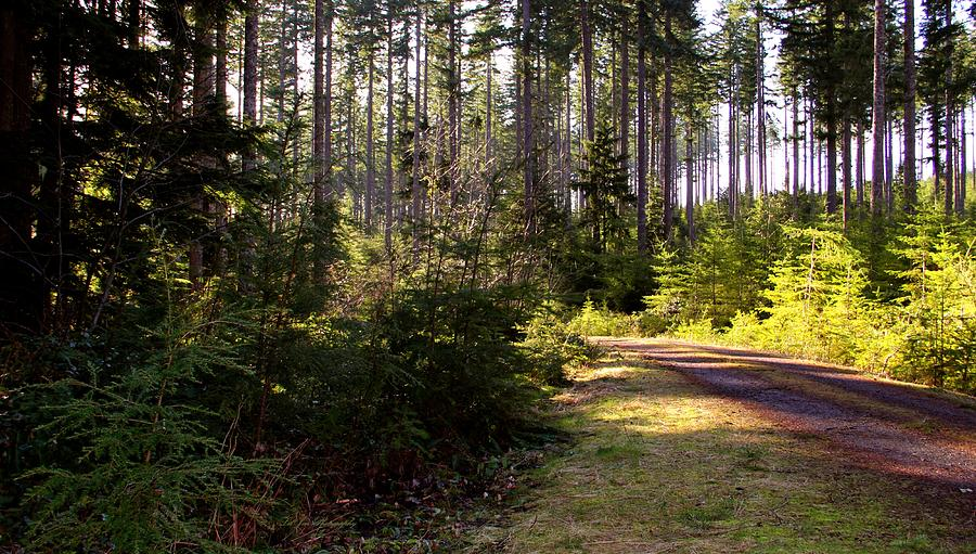 Capitol Forest Photograph - Capitol Forest Logging Road by Jeanette C Landstrom