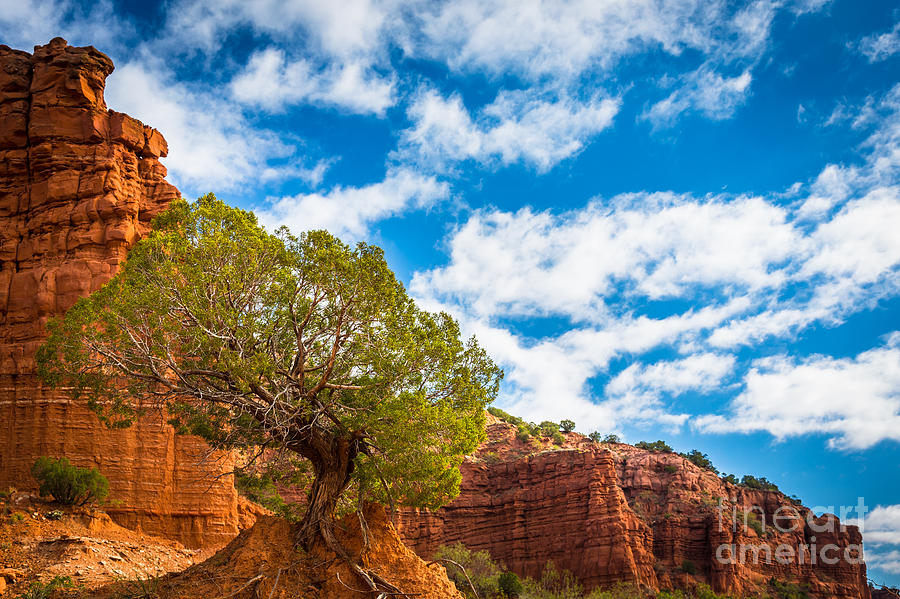 America Photograph - Caprock Canyon Tree by Inge Johnsson