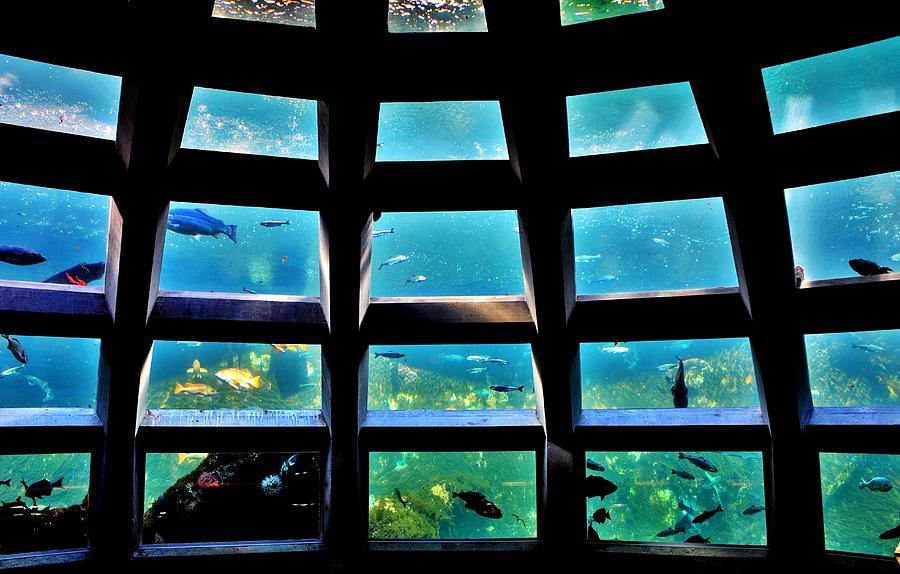Aquarium Photograph - Captaining The Nautilus by Benjamin Yeager