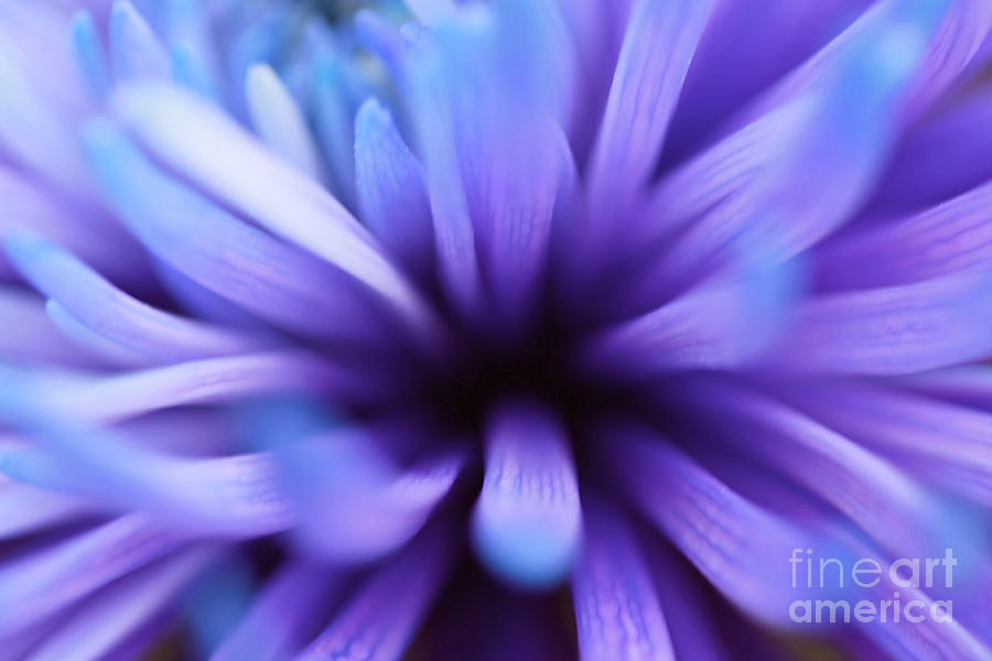 Floral Photography Photograph - Captivation by Inspired Nature Photography Fine Art Photography