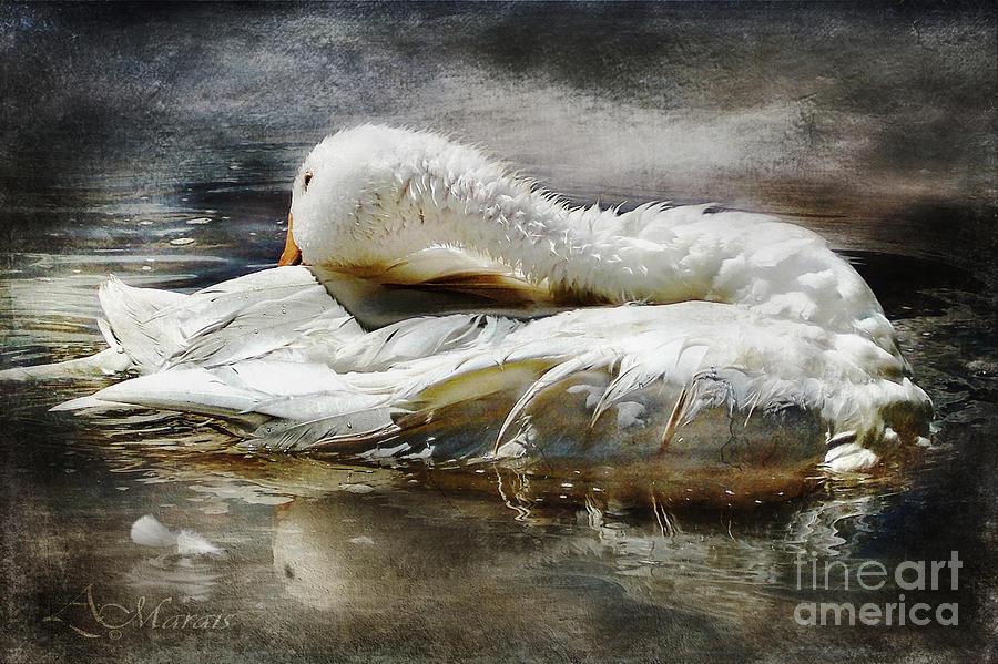 Water  Digital Art - Captured Memories Iv by Adelita Rog