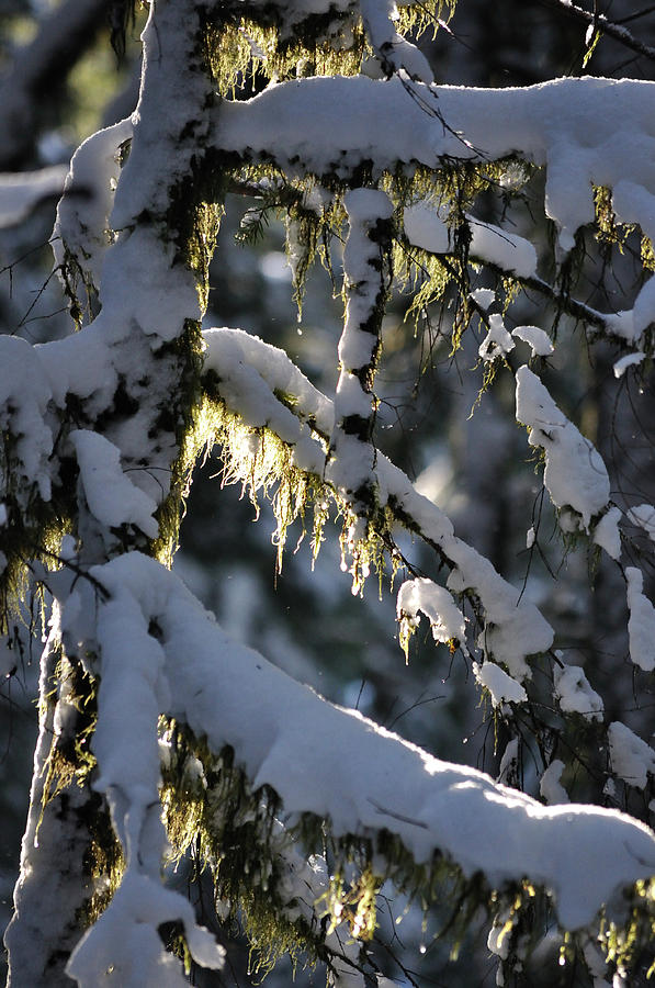 Moss Photograph - Capturing The Warmth by Heather L Wright