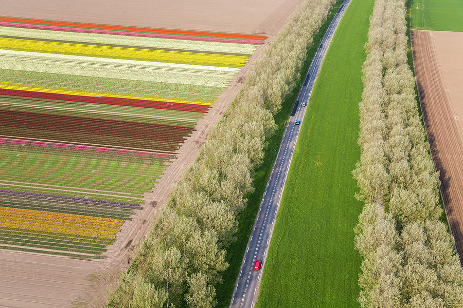 Car On Road Near Tulip Fields, Holland Photograph by Peter Adams