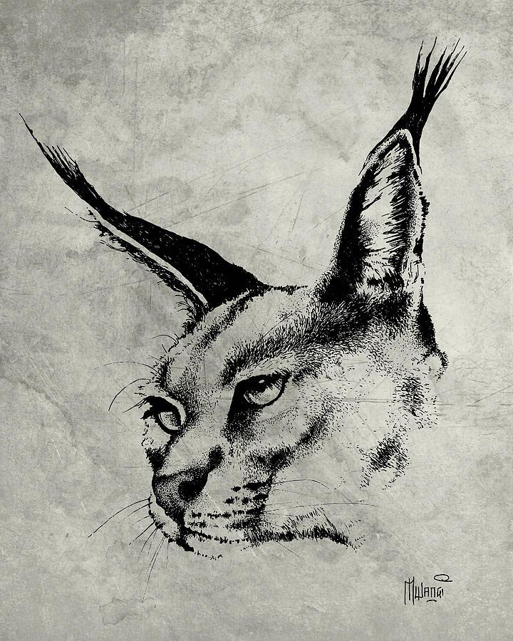 Caracal Greyscale Drawing