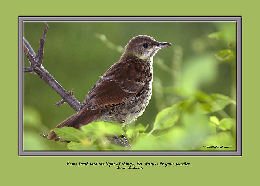 Greeting Cards Photograph - Card  0020 by Helen Ellis