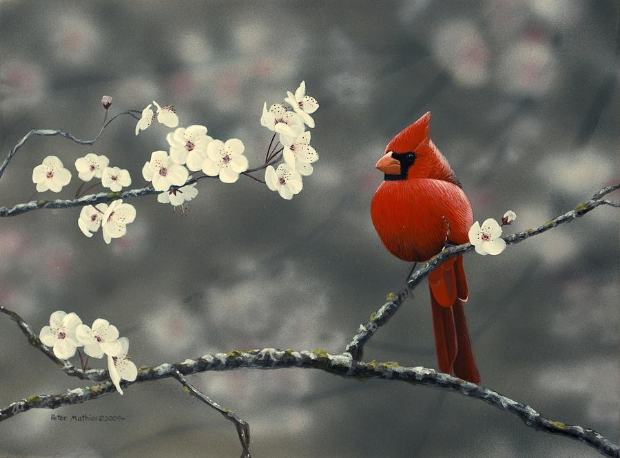 Mathios Painting - Cardinal And Blossoms by Peter Mathios