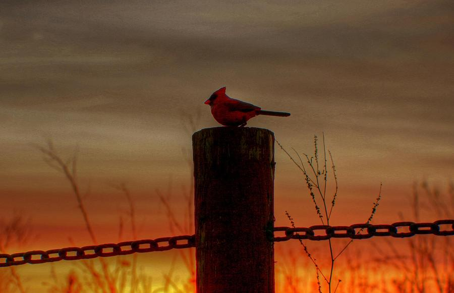 Sunset Photograph - Cardinal At Sunset by Larry Trupp