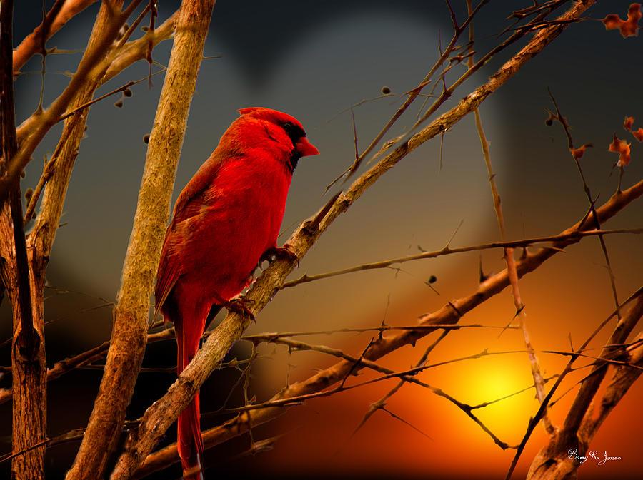 Bird Photograph - Cardinal At Sunset Valentine by Barry Jones