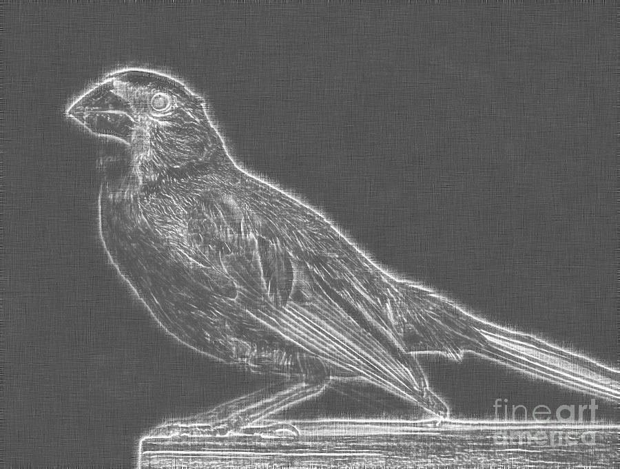Cardinal Bird Glowing Charcoal Sketch Drawing