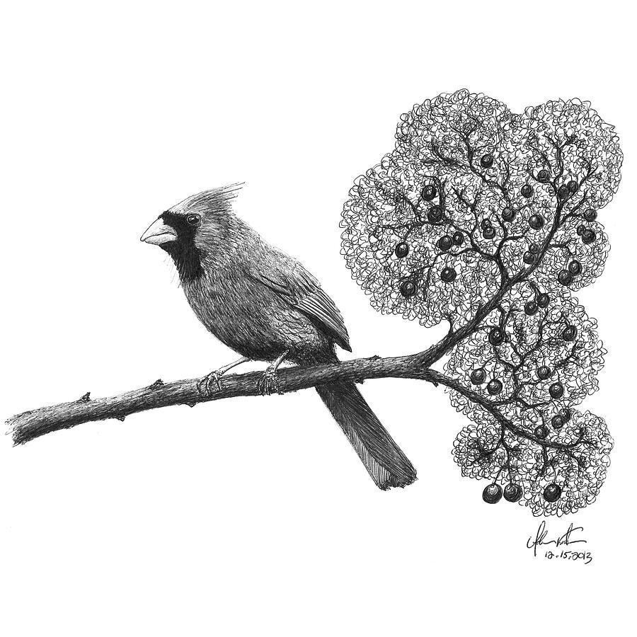 Cardinal Drawing - Cardinal Bird On Branch by Adam Vereecke