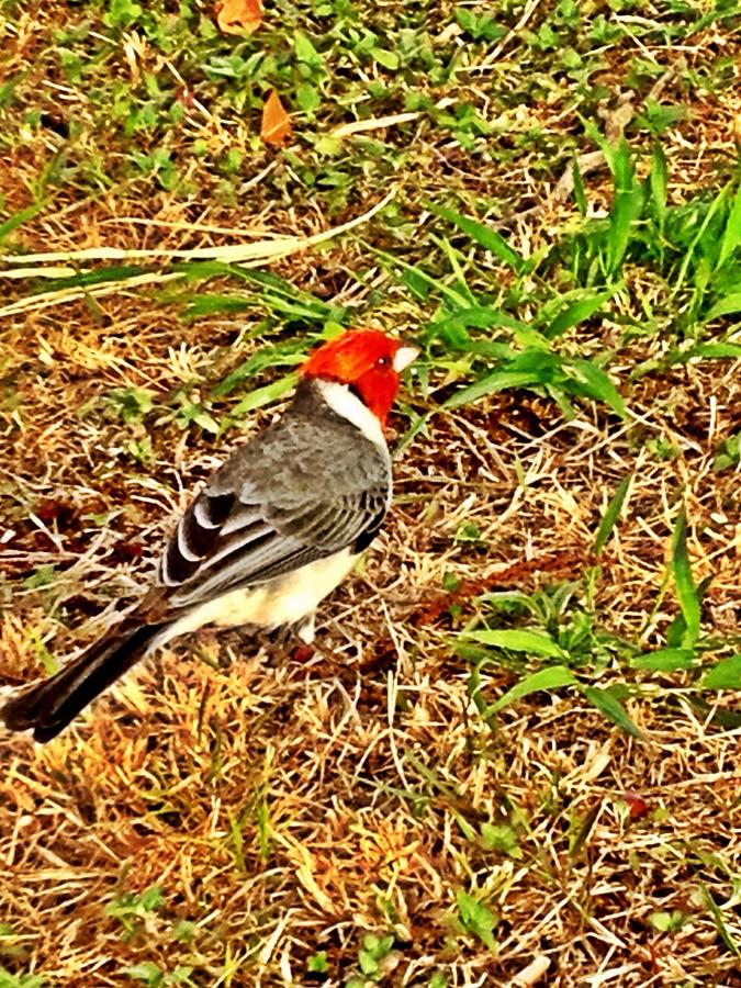 Cardinal Photograph - Cardinal In Thought by Tiffany Baltrus