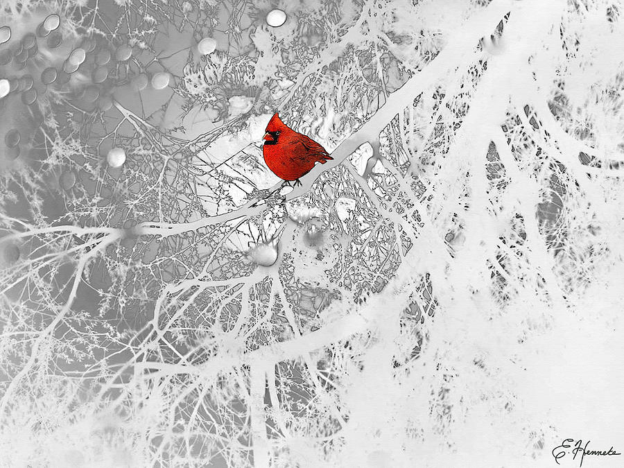 Cardinal In Winter Drawing by Ellen Henneke