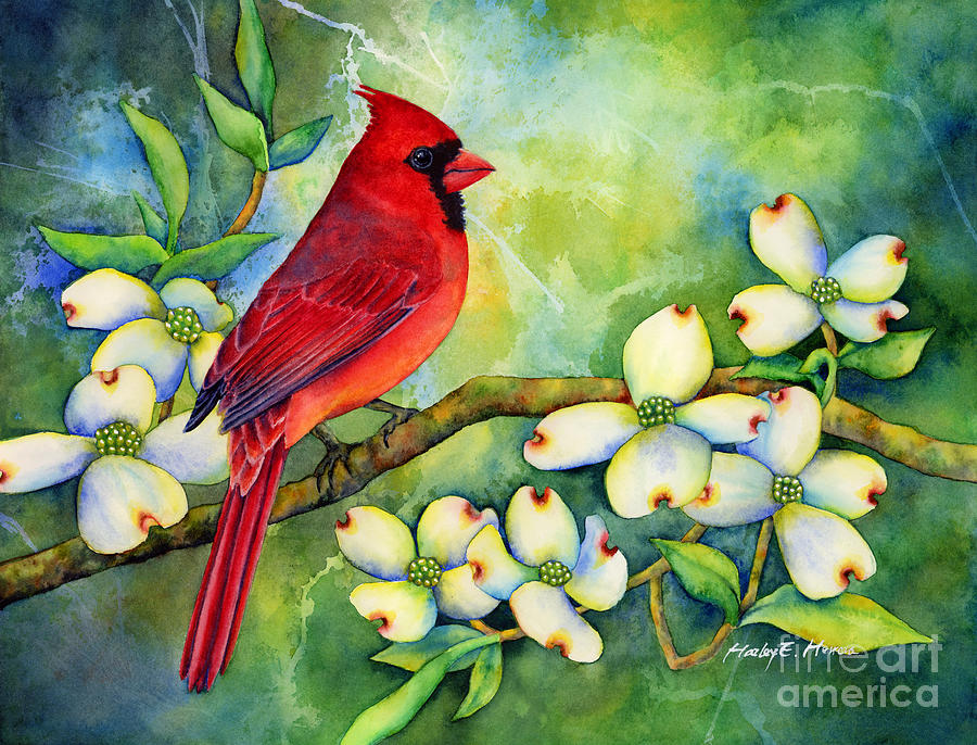 Cardinal On Dogwood Painting