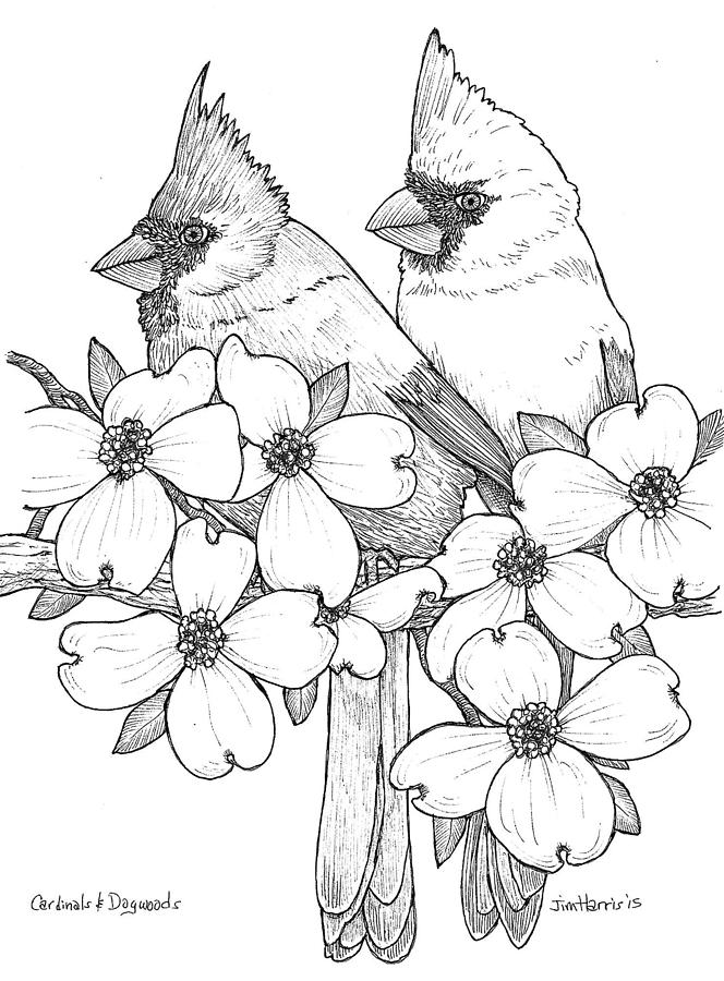 Cardinals And Dogwoods Drawing By Jim Harris