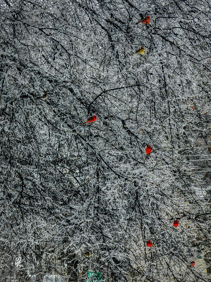 Cardinal Photograph - Cardinals In An Ice Storm 001 by Lance Vaughn