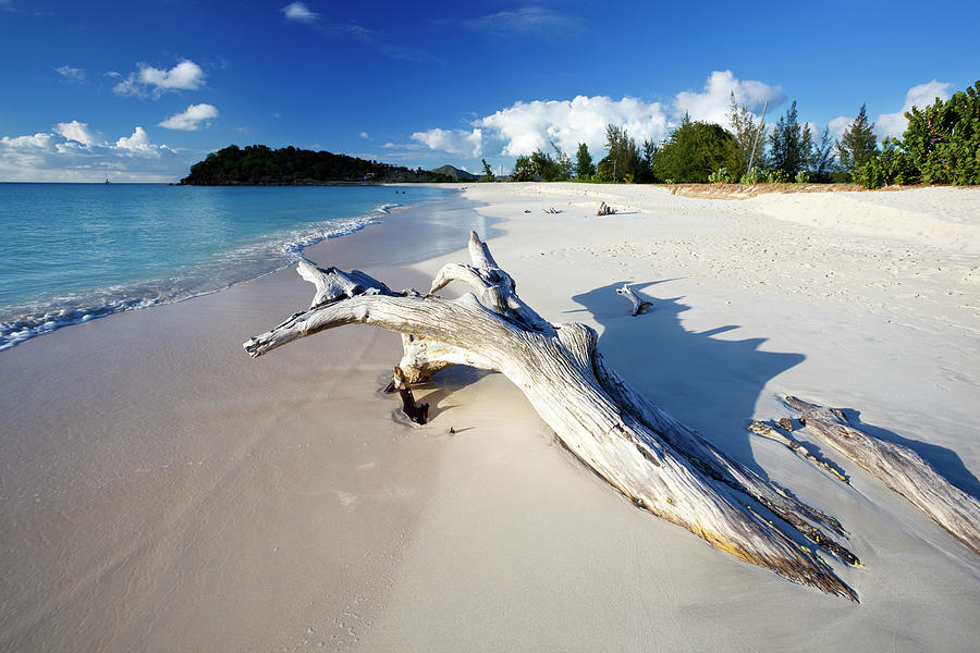 Caribbean Beach With Driftwood Photograph by Michaelutech