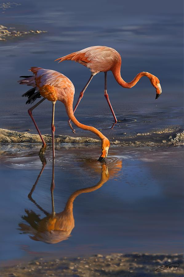 Bird Digital Art - Caribbean Flamingos by Owen Bell