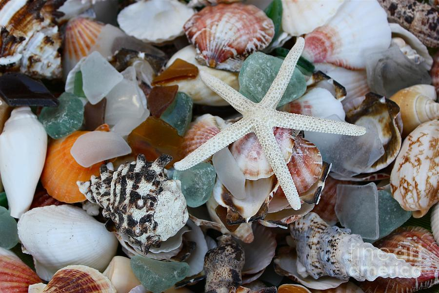 Caribbean Shells by The Art of Alice Terrill