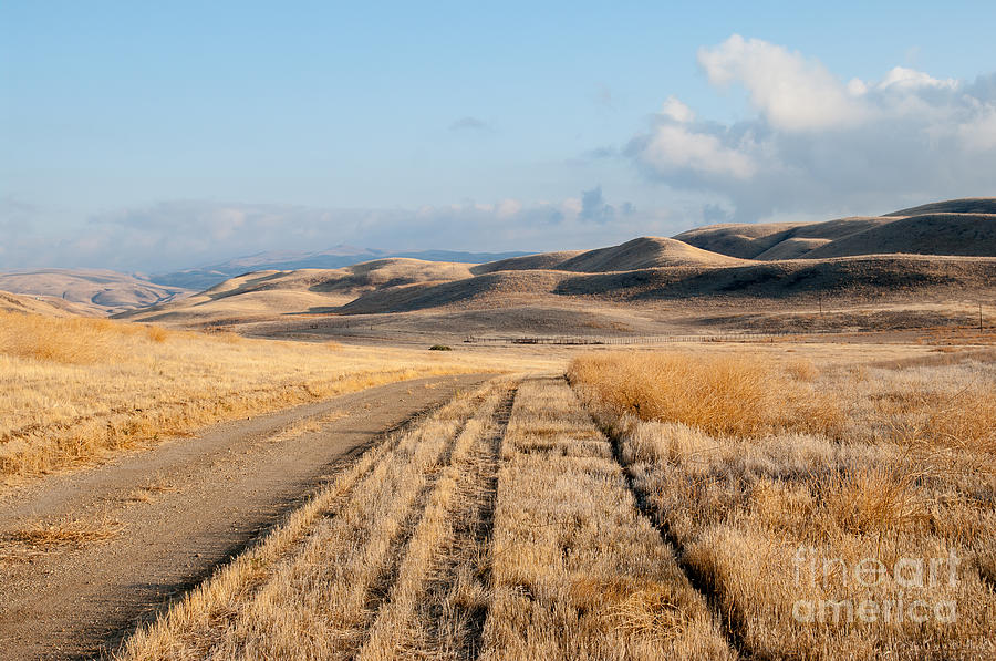 Carizzo Plains Nm 2-8559 Photograph by Stephen Parker