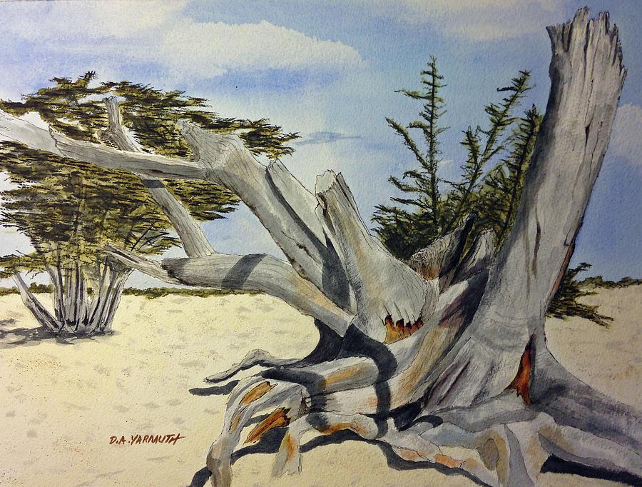 Carmel Cypress by Dale Yarmuth