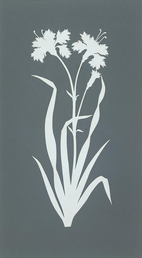 Silhouettes Painting - Carnation  by Philipp Otto Runge