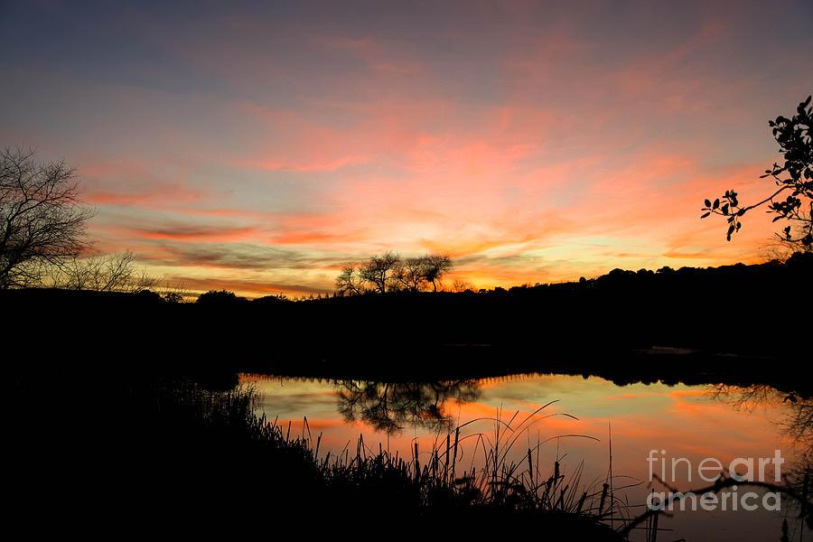 Sunset Photograph - Carneros Reflection by Jordan Rusin