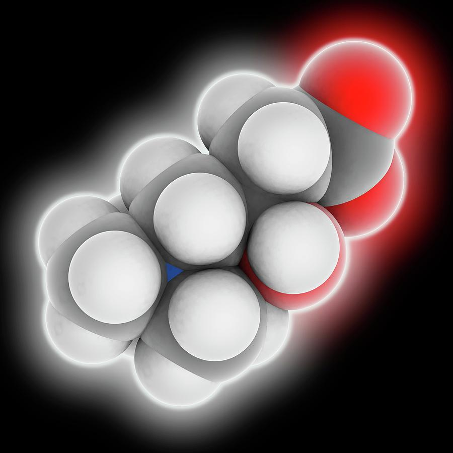 Artwork Photograph - Carnitine Molecule by Laguna Design