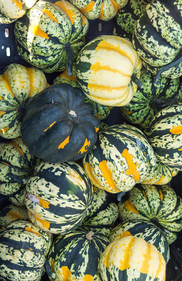 Agriculture Photograph - Carnival Winter Squash At The Market by John Trax