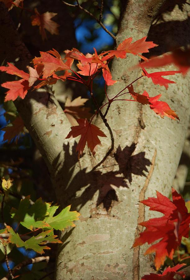 Autumn Photograph - Carolina Autumn by Suzanne Gaff