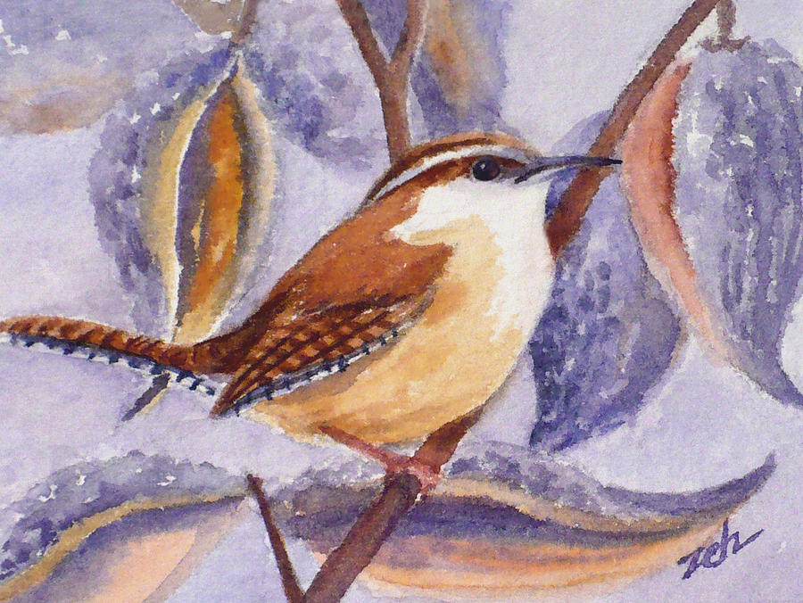 Carolina Wren and Milkweed Pods by Janet Zeh