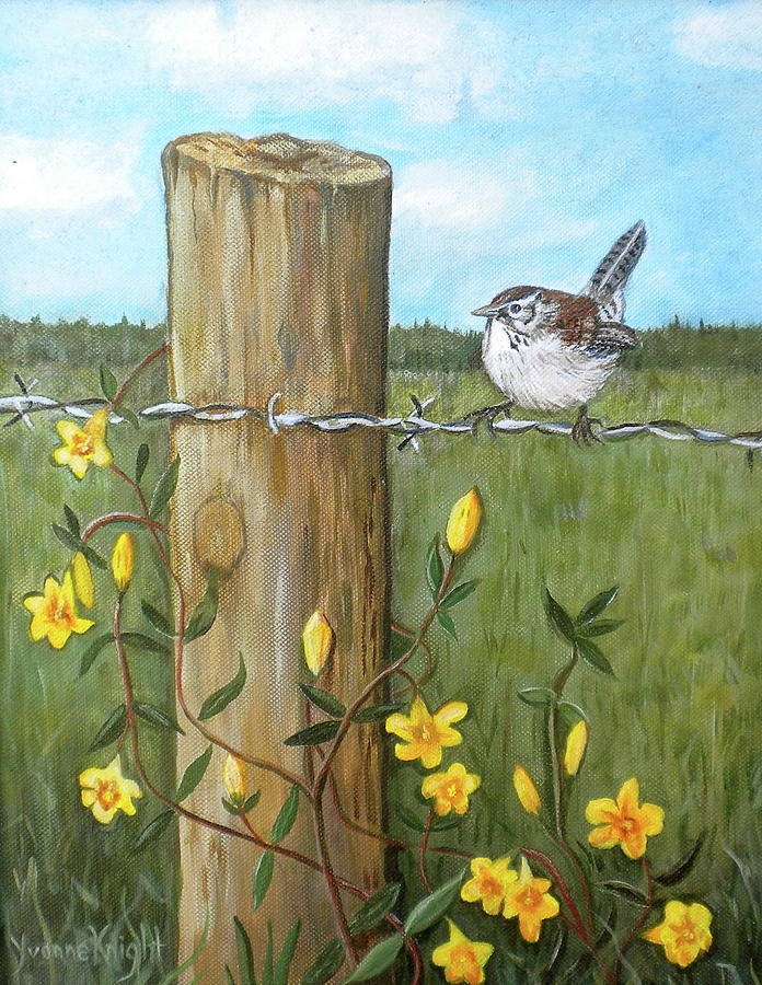 Carolina Wren Painting By Yvonne Knight