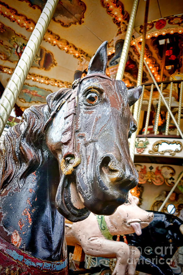 Carousel Horse Head Photograph By Olivier Le Queinec
