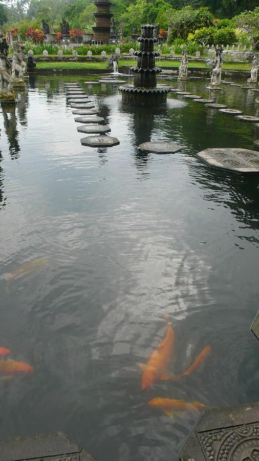 Bali Photograph - Carp Pond Bali by Jack Edson Adams
