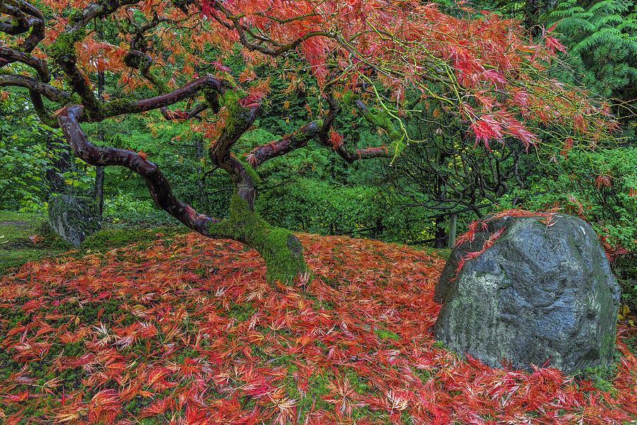 Portland Japanese Garden Photograph - Carpet Of Fall Colors In Portland Japanese Garden by David Gn