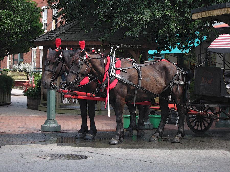 Horses Photograph - Carriage Horses At City Market by Linda Ryan