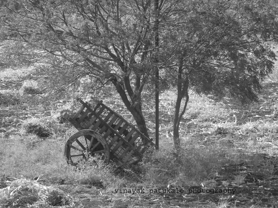 Landscape Photograph - Cart by Vinayak Patukale