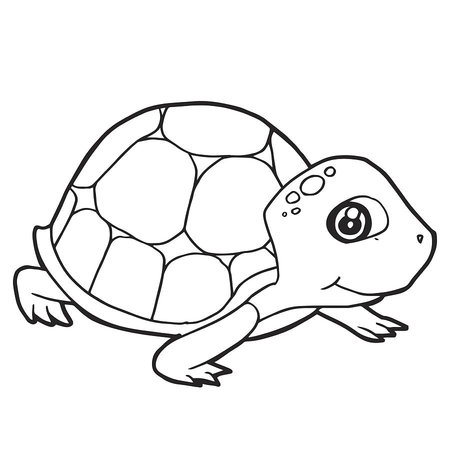 cute turtle coloring pages.html
