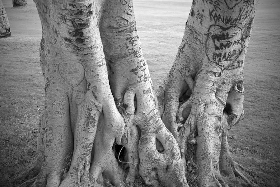 Kaanapali Photograph - Carved Roots by Chris Ann Wiggins