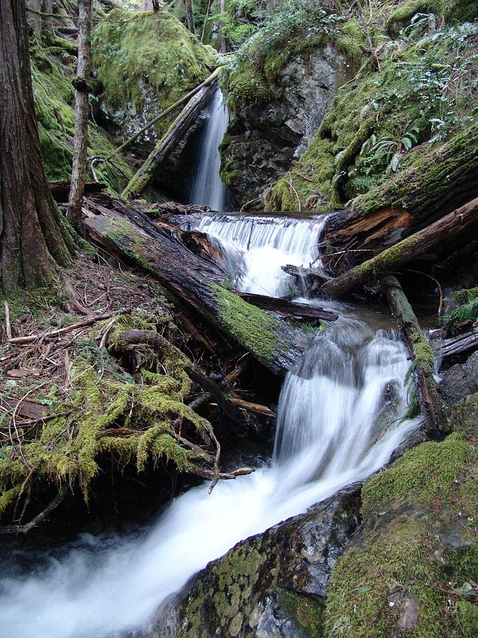 Cascade Rainforest Waterfall Swirls - British Columbia Photograph