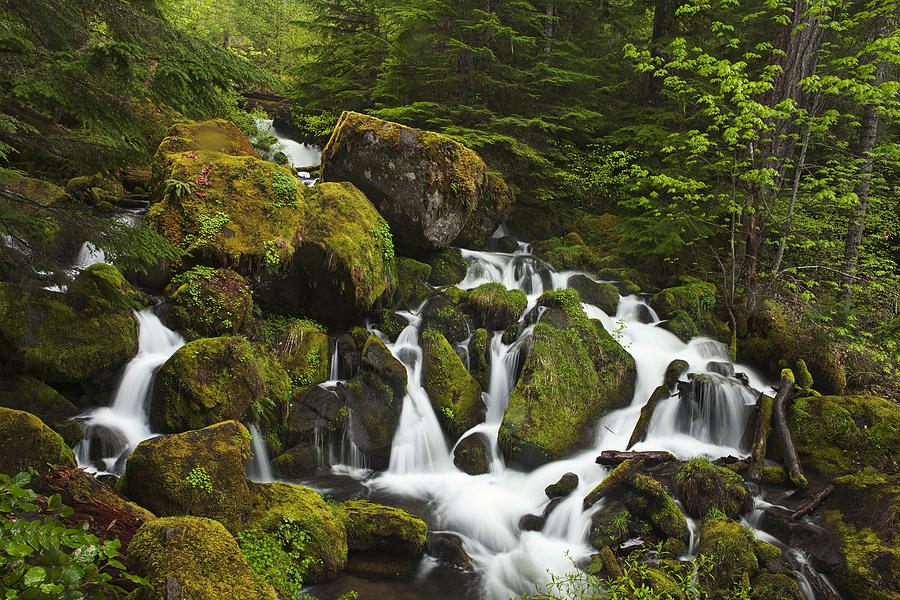 Waterfall Photograph - Cascades In The Woods by Andrew Soundarajan