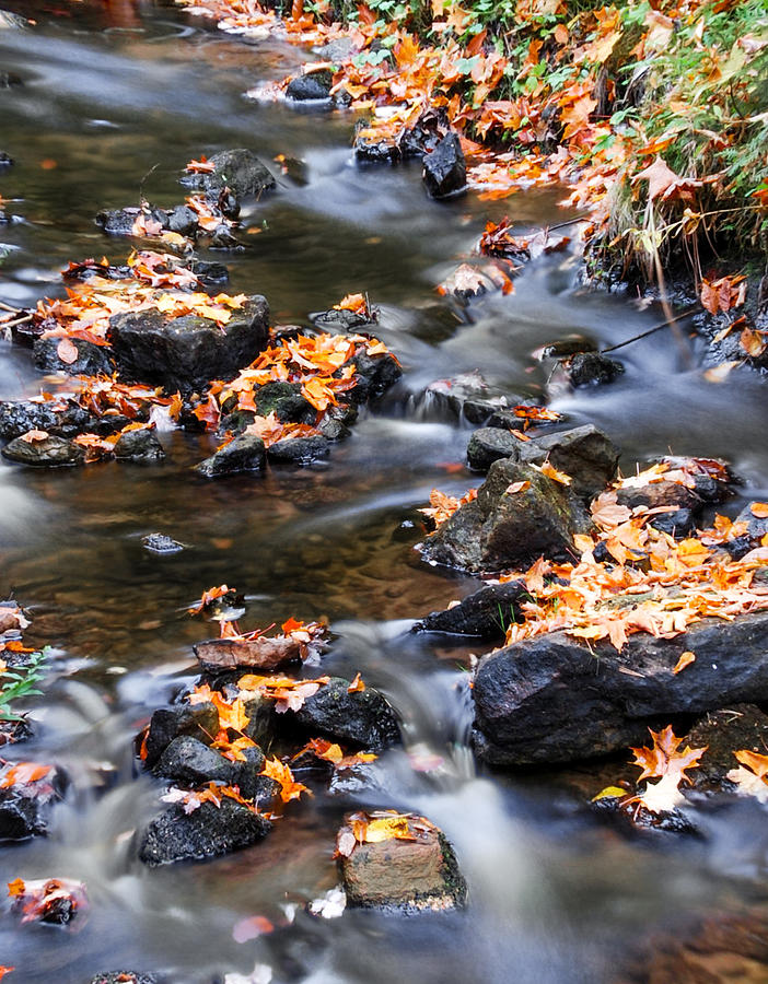 Rocks Photograph - Cascading Autumn Leaves On The Miners River by Optical Playground By MP Ray