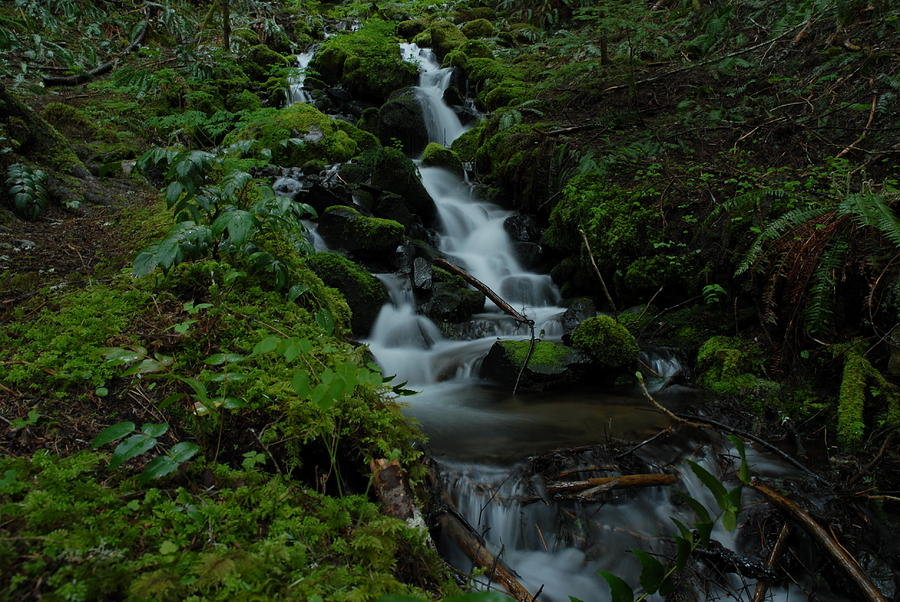 Flowing Water Photograph - Cascading Brook In Mount Rainier National Park by Clifford Pugliese
