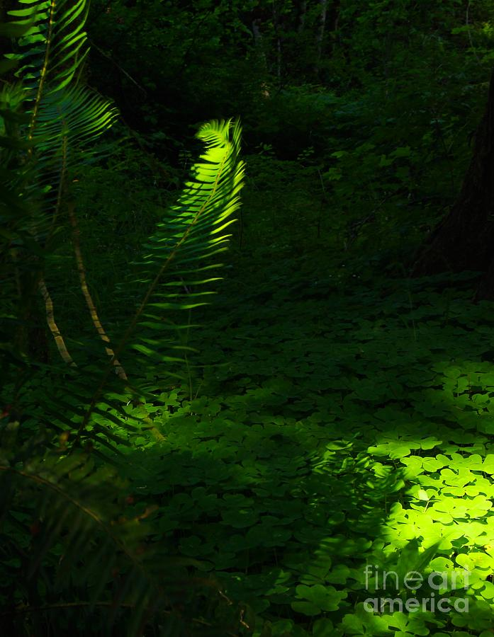 Ferns Photograph - Casting Light by Tim Rice