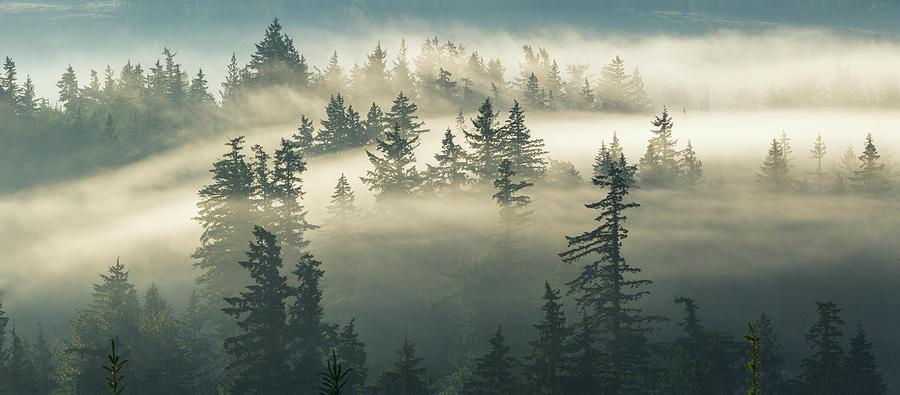 Fog Photograph - Castles In The Fog by Manju Shekhar