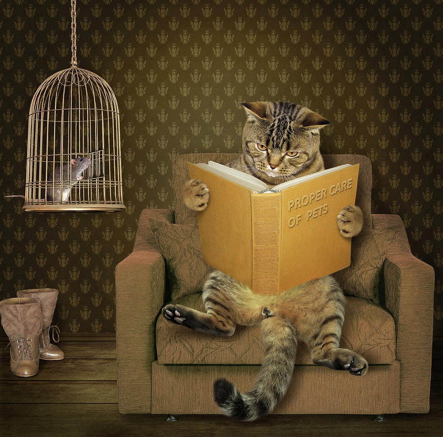 Cat Photograph - Cat And His Pet..... by Iryna Kuznetsova (iridi)